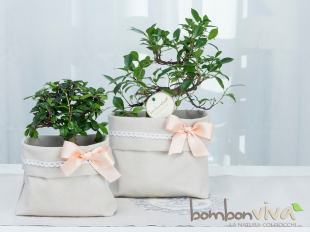 bomboniera-green-bonsai-eco